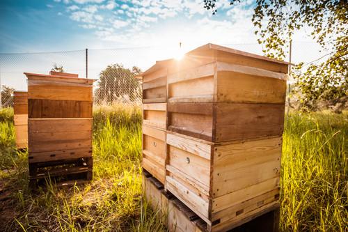 Rettung für Biene Maja: Porsche hat Honig im Kopf