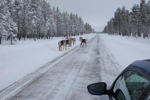 Erfahrung auf Eis 2012: Mit Renntieren leben.