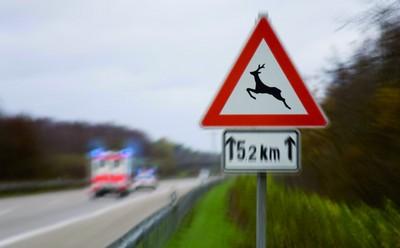 Bei Wildunfällen kamen 2008 in Deutschland über 20 Menschen ums Leben.