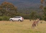 Volvo kann bald auch Känguru