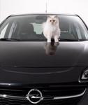 Karl Lagerfeld setzt den Opel Corsa mit Katze in Szene